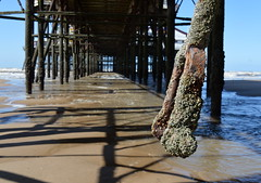 Under the North Pier at Blackpool (Tony Worrall Foto) Tags: county uk sea england english wet water metal town seaside stream tour shadows open place northwest unitedkingdom decay tide country north visit location tony lancashire resort coastal covered frame area northern pillars update dangle blackpool crusty attraction lancs fylde northpier fyldecoast worrall welovethenorth 2015 2015tonyworrall