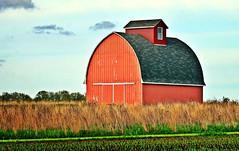 Red Barn (forestforthetress) Tags: sky color field barn rural illinois corn nikon farm omot
