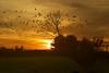 Across the sunset (stephi.G.) Tags: autumn light sunset shadow sky sun black color colour yellow night nikon hour photostream beautifulearth d3200 platinumpeaceaward