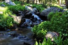 Lake Isabelle Trail (Circled Thrice) Tags: longexposure blur green water creek forest trek canon landscape eos rebel colorado stream path walk nederland sigma hike trail co wetland brainard snowmelt t3i recreationarea brainardlake brainardlakerecreationarea