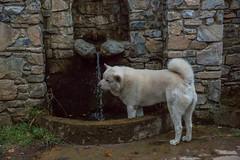 Time to cool down (RCARCARCA) Tags: thirsty fountain palaiospanteleimonas husky 5diii greece canon evening 2470l 2016