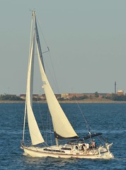 S/V Independence (jelpics) Tags: independence svindependence syindependence sailboat sailingvessel sail mast boston bostonharbor bostonma harbor massachusetts ocean port sea boat ship vessel