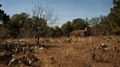 Ranch to Market Rd 3343 (Anne Worner) Tags: leanderroad georgetown texas abandoned oldfarm texasshack landscape filed cactus pricklypear dry sunny trees oak liveoak scenery layers ononesoftware anneworner greatdof