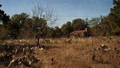 Ranch to Market Rd 3343 (Anne Worner) Tags: leanderroad georgetown texas abandoned oldfarm texasshack landscape filed cactus pricklypear dry sunny trees oak liveoak scenery layers ononesoftware anneworner greatdof