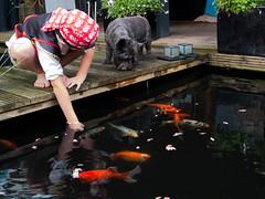 DSCF2272 (ronaldzijlstra2) Tags: kid son boy dog cairnterrier koi vis vish vijver pond