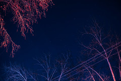 Untitled (elsableda) Tags: night midnight long exposure johannesburg joburg southafrica tree tress stars sky canon lights