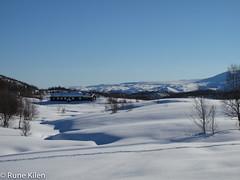 IMG_3492.jpg (kitlo59) Tags: vinter myrland