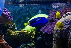 Dory (Fajar Pangestu) Tags: leica leicadlux109 aquarium fish animal beautiful art explore
