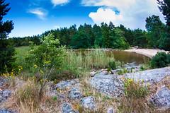 IMG_1100-1 (Andre56154) Tags: schweden sweden sverige vnern see lake wasser water ufer shore schilf reed strand beach himmel sky wolken clouds