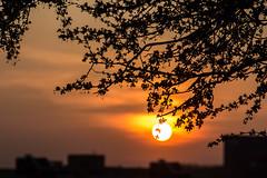 Sonnenuntergang im Mauerpark (Pellkartoffel91) Tags: light sunset shadow sun tree berlin silhouette abend licht twilight sonnenuntergang sonne schatten baum mauerpark zweige abendrot