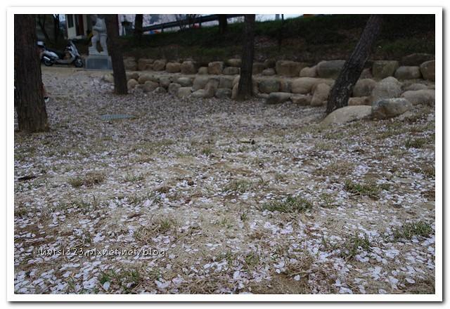 화개십리벚꽃길39