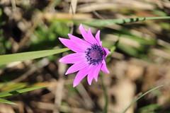Flower - Fiore (Stefano Piazza) Tags: flower nature canon natura piazza fiore stefano 1200d