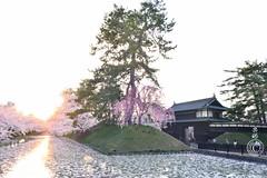 Sunset at Hirosaki Castle outer mote. 弘前城。© Glenn E Waters. Japan 2015. (Glenn Waters ぐれんin Japan.) Tags: castle japan sakura cherryblossoms hirosaki nikond800 glennwaters