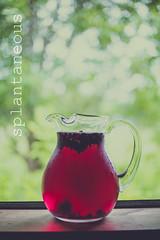 Jamaica (Akire Andrade) Tags: spring agua hibiscus jamaica refreshing glassjar jarra aguadulce canoneos5dmarkiii