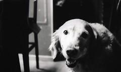 (Max Miedinger) Tags: portrait blackandwhite dog film girl contrast this blackwhite high nikon with gates films 14 bn iso developer 400 xray orwell epson sw f3 six developed bianconero biancoenero sgf v700 dilution sixgatesfilms xomat