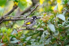 20150522 Photo 001 (flicka.pang) Tags: bird australia melbourne fujifilm vic xpro1 fujifilmxpro1 fujifilmxf56mmf12r