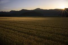201505263108 (Gansan00) Tags: sun japan landscape sony   yamaguchi       ilce7r