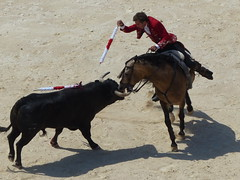 Pablo Hermoso de Mendoza, Corrida du 24/05/2015, Fria de Nmes 2015, Nmes, Gard, Languedoc-Roussillon (Marc Pquignot) Tags: corrida gard nmes languedocroussillon rejoneador pablohermosodemendoza friadenmes2015