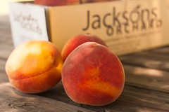 Flaming Fury- (Jackson's Orchard) Tags: kentucky peach orchard bowlinggreen bowlinggreenky jacksonsorchard flamingfury