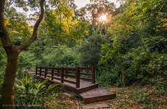 Coming over (ELX_Images) Tags: asia elxphotography landscape outdoor park sun taichung taiwan trees bridge hiking holiday jungle nature path recreation stones wood