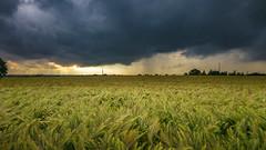 kein Bett im Kornfeld (stauffi2012) Tags: handy wolken samsung edge gewitter regen herne zillertal kornfeld weizen steag