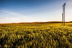 Power to the people (Culinary Fool) Tags: wheat usa washington 2016 powerlines rollinghills powerpoles wa brendajpederson travel roadtrip photography palouse hills farm ranch may culinaryfool travelwa 2470mm28