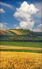 Srem's serenity 02 (Katarina 2353) Tags: landscape vertorama vojvodina serbia europe srbija katarina2353 katarinastefanovic film nikon