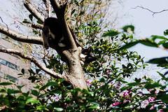 neko-neko1466 (kuro-gin) Tags: cat cats animal japan snap street straycat