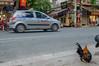 Chicken hailing a taxi (Steve_McCaul) Tags: beginnerdigitalphotographychallengewinner chicken