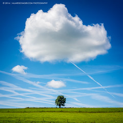 Got My Cloud Made Up (Allard Schager) Tags: belgi belgium belgique wallonia walloni allardschager nikond810 nikkor2470mmf28 landscape summer tree lonetree cloud sky green blue beautyinnature meadow grass day outdoors skyporn cloud9 wanderlust plombires 2016 serene peace peaceful
