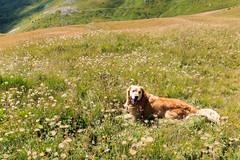 IMG_6658 (rickyrebora) Tags: col basset sauze doulx sestriere summer mountain montagna prati