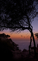 Silent pinewoods. f5.6; 1/80s; ISO 100; FL20mm.  Juan Manuel Saenz de Santa Mara, 2016 (Brenus) Tags: impresiones lensblr photographers tumblr original landscape seascape sunrise pines pinewoods backlight mediterranean sea