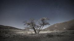 Desert silence under moonlight (Alex Savenok) Tags: moonlight desert silence moon trees longexposure longexpo samyang14mm stars night nightsky negev israel israelnature