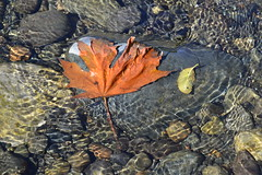 Early autumn? (shireye) Tags: rocks river comoxvalley bc britishcolumbia ripples patterns autumn
