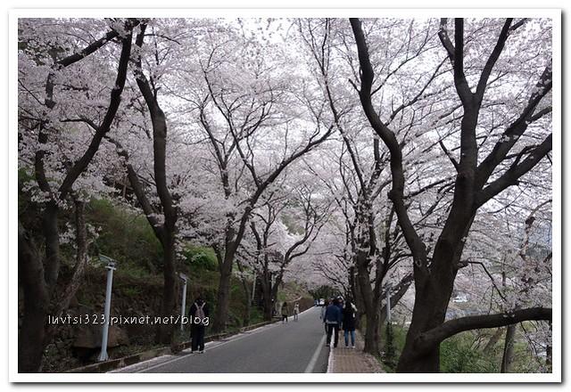 화개십리벚꽃길25
