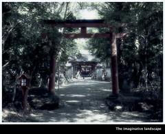 P3829  Hachiman-jinja (The imaginative landscape) Tags: theimaginativelandscape olympuspenep3 ealabo fuwarysuke yamato nara japan shrine mainapproach torii     sacredgrove