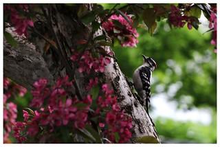 En fleurs et en oiseau / With Flowers And Bird