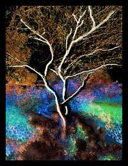 Abstract- Swamp Lights (chazart7777) Tags: abstract tree photomanipulation colorful purple gimp surreal marsh macabre imagemanipulation awardtree