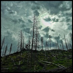Stark beauty... (Sherrianne100) Tags: trees clouds fire yellowstonenationalpark stark devastation