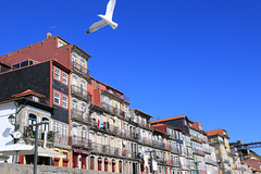 Have a bright future (Ming_Young) Tags: portugal seagull bluesky porto douroriver