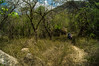 DSC03253 (Braulio Gómez) Tags: barrancadehuentitã¡n biodiversidad caminoamascuala canyon canyonhuentitan faunayflora floresyplantas guadalajara guardianesdelabarranca huentitã¡n ixtlahuacandelrão jalisco mountainrange mã©xico naturaleza paisaje senderismo sierra barrancadehuentitán barranca huentitán ixtlahuacandelrío méxico