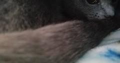 Kitty under a blanket via http://ift.tt/29KELz0 (dozhub) Tags: cat kitty kitten cute funny aww adorable cats
