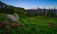 Mount Rainier Sunrise (dwolters2) Tags: backpacking nationalparks wilderness rainiernp heather wildflowers sunrise washington hdr blending northwest cascades mountains