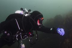 20160803-Eyemouth8 (Dacmirc) Tags: eyemouth diving ukdiving rebreather