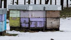 Bees 3 (NOL LUV DI) Tags: snow napier hawkesbay