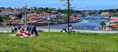 A book and an Inspiring View (Biolchini) Tags: portugal porto street urban sunbath book river rio livro jardim garden marcelobiolchini 2016