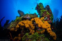 Lea Lea's Lookout, Little Cayman (jcl8888) Tags: cayman scuba underwater fisheye diving nikon d7200 tokina 1017mm liveaboard