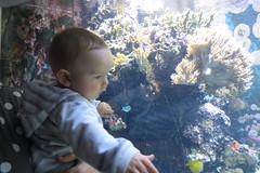 Sam at Horniman Museum (lizsmith) Tags: hornimanmuseum london museum aquarium