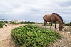 Menorca-16071459 (Lee Live: Photographer) Tags: beach ciutadella crazygolf holiday leelive mahon ourdreamphotography sonbou sunset