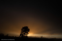 """Sometimes when you're in a dark place you think you've been buried, but you've actually been planted.   Christine Caine  """"explore"""" (dewollewei) Tags: trees tree sunset zonsondergang twenterand twente engbertsdijkse venen engbertsdijksevenen explore explored red sky light netherlands overijssel"""